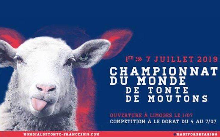 06d84936914 Tonte des moutons dimanche 12 mai 2019